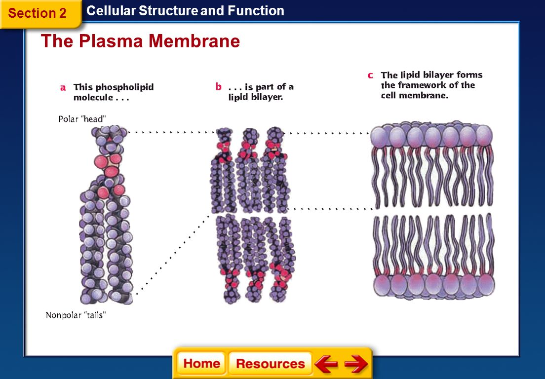 cell structure and function 2 essay Chapter 3: movement of substances across the plasma membran no mark scheme sub mark total mark 1 (a)(i) able to name structure labeled p ,q and r.