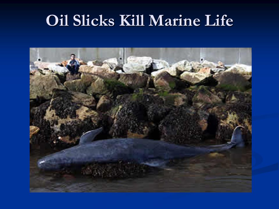 Oil Slicks Kill Marine Life