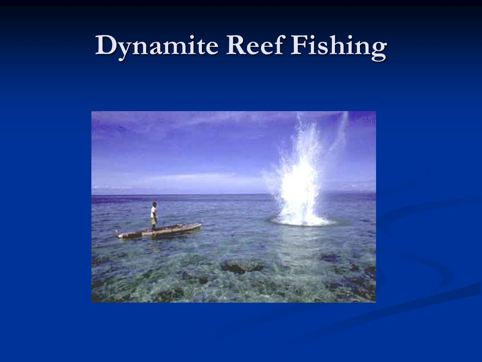 Dynamite Reef Fishing