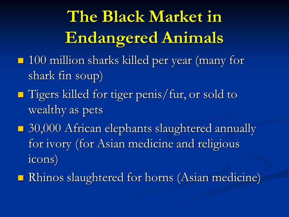 The Black Market in Endangered Animals
