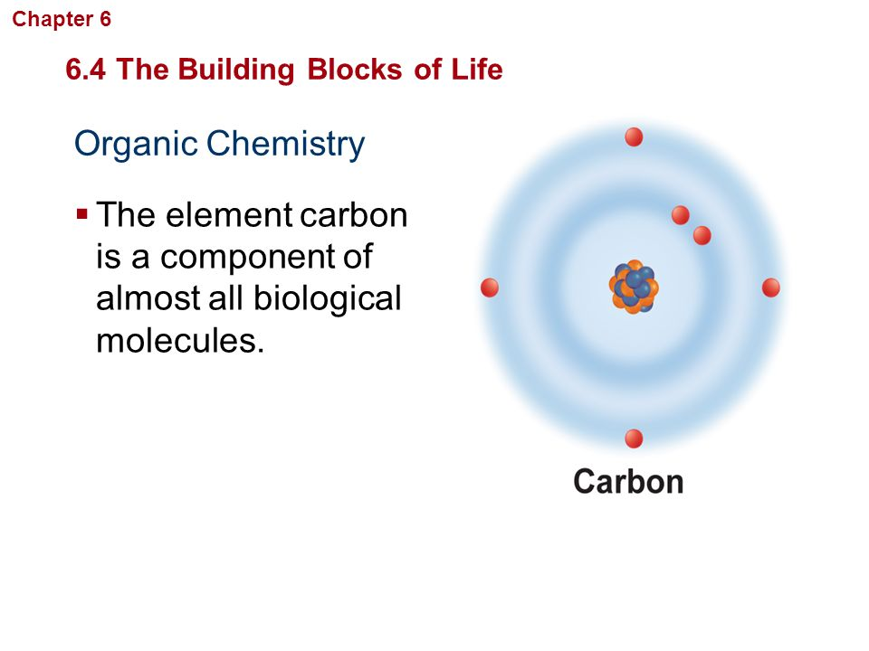 The element carbon is a component of almost all biological molecules.