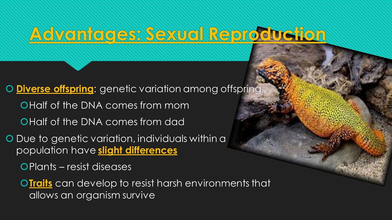 Amphibian asexual reproduction advantages
