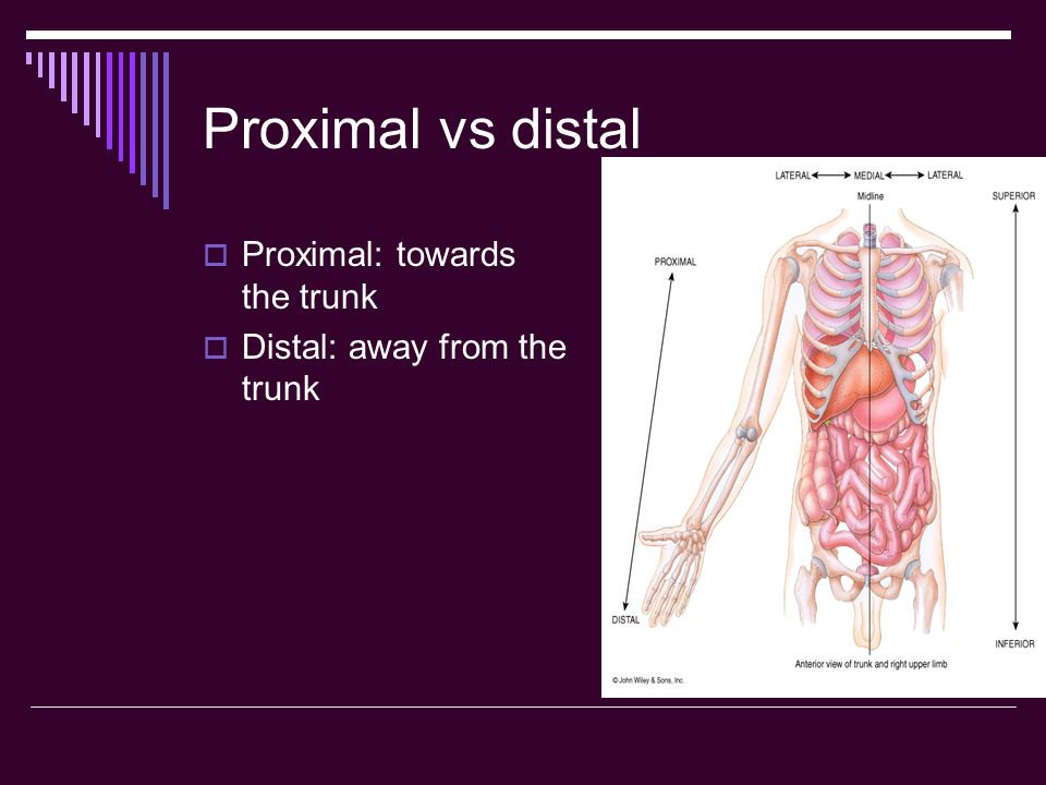 Proximal vs distal Proximal: towards the trunk