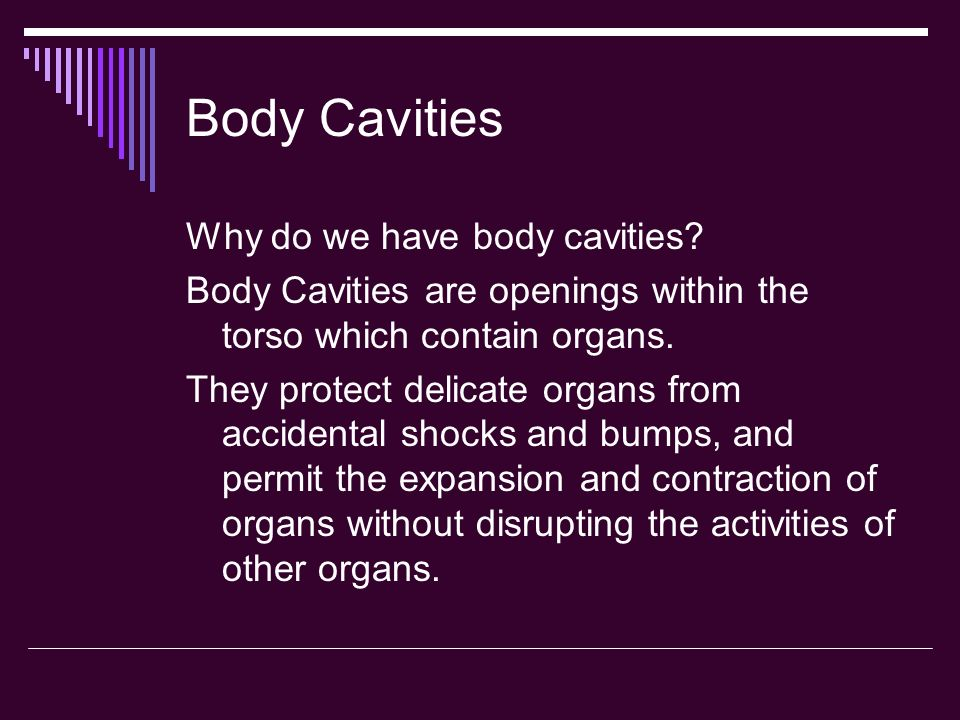 Body Cavities Why do we have body cavities