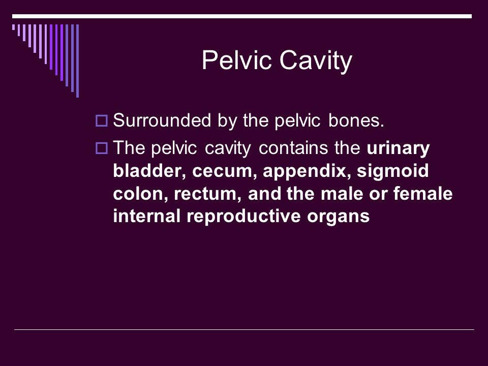 Pelvic Cavity Surrounded by the pelvic bones.