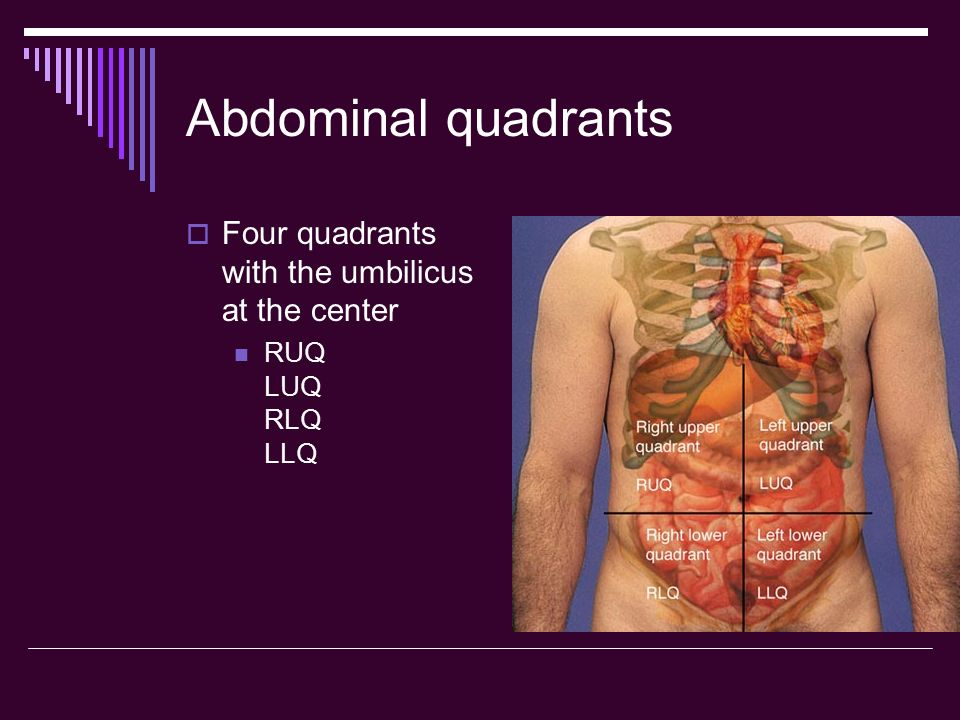 Abdominal quadrants Four quadrants with the umbilicus at the center
