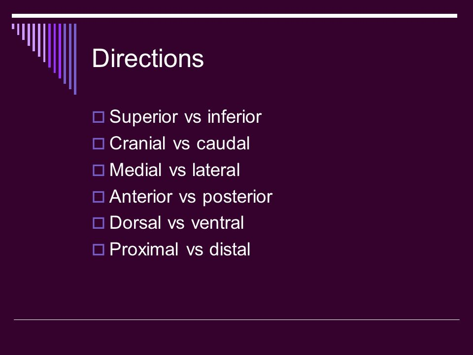 Directions Superior vs inferior Cranial vs caudal Medial vs lateral