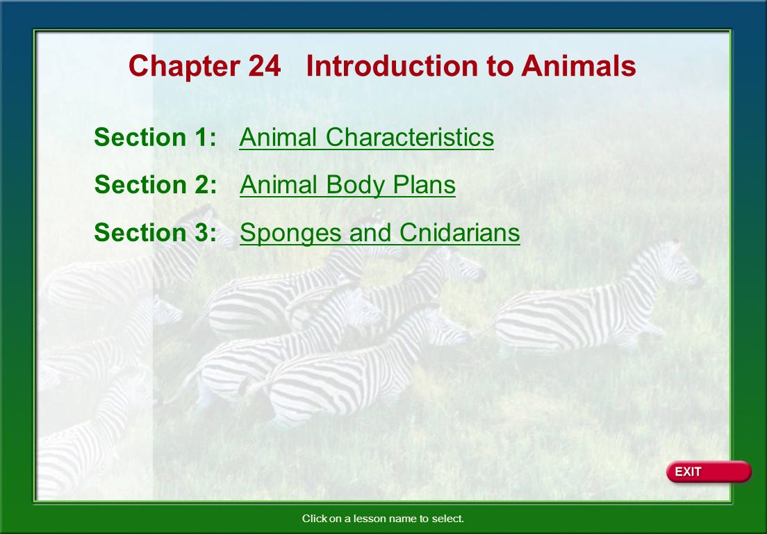 ... 3: Sponges and Cnidarians. Chapter 24 Introduction to Animals