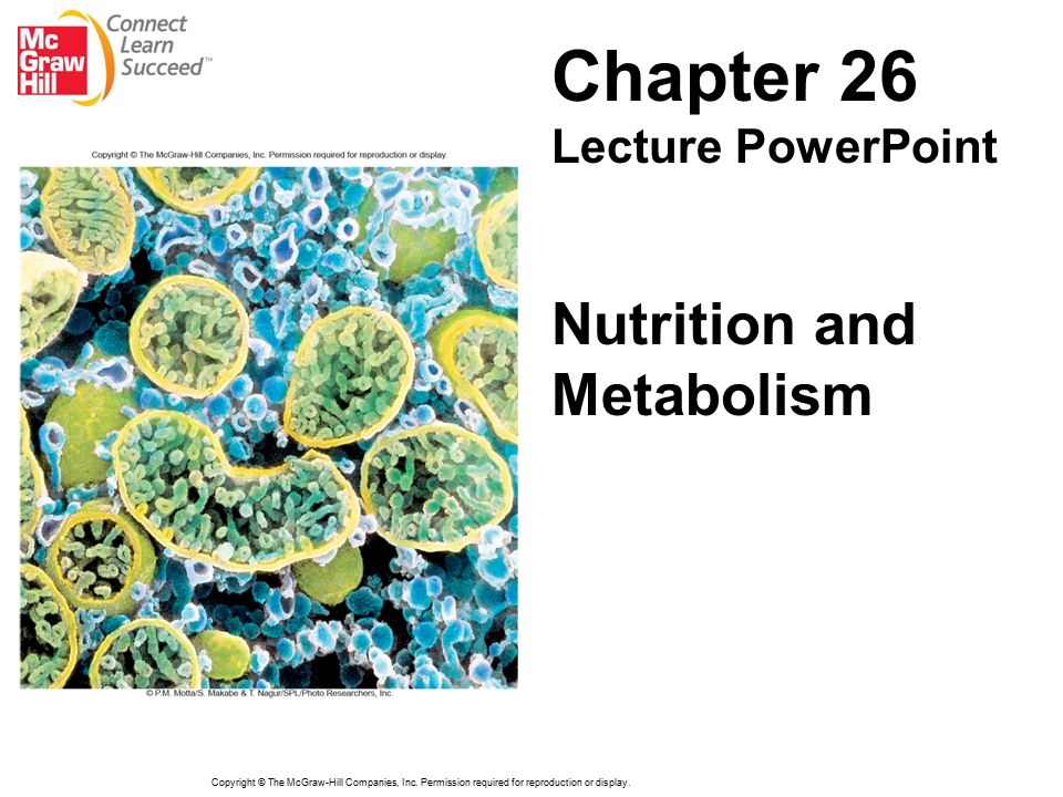 chapter 26 nutrition and metabolism lecture powerpoint ppt download