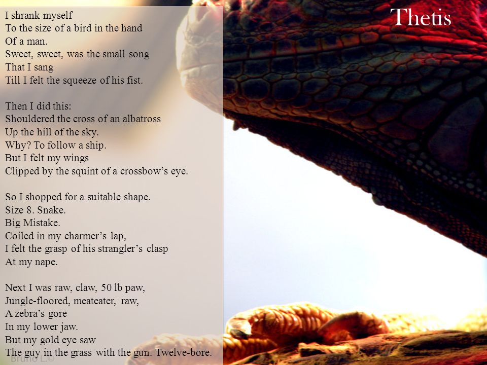 Thetis Carol Ann Duffy`  - ppt download