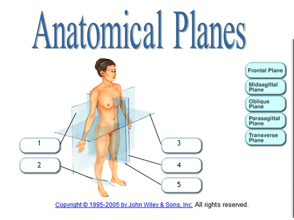 Introduction to Anatomical Directions and Orientation - ppt video ...