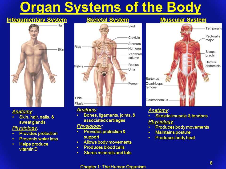 Chapter 1: The Human Organism - ppt video online download