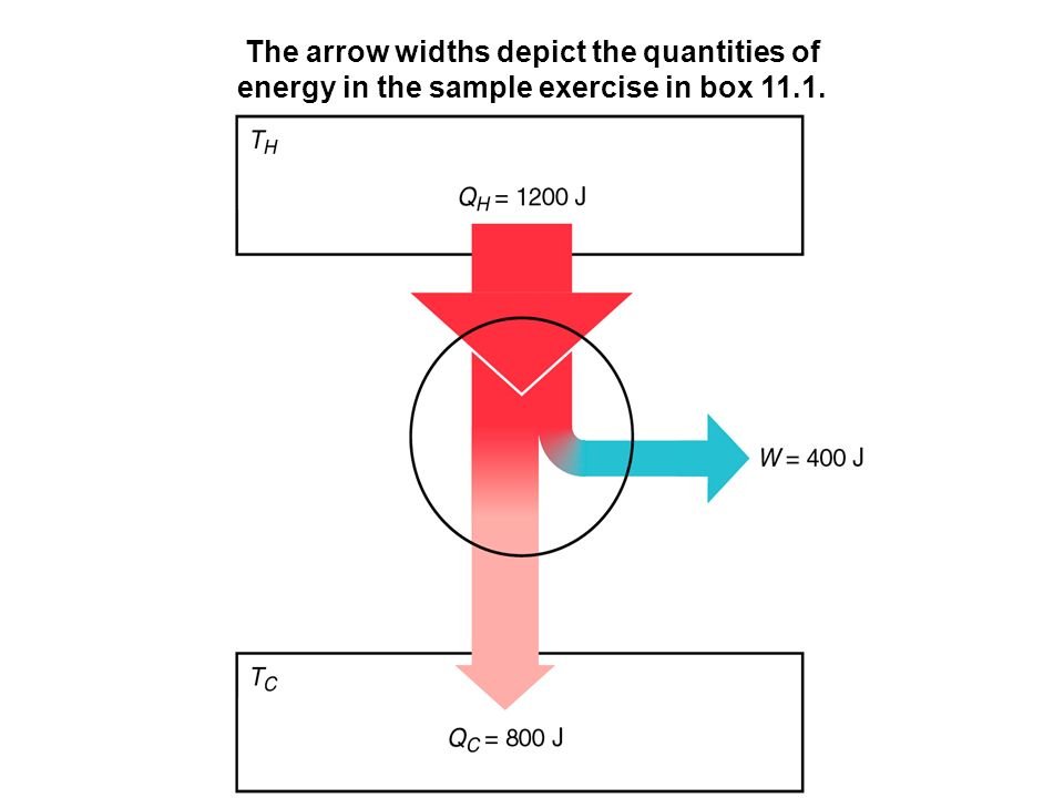 The arrow widths depict the quantities of energy in the sample exercise in box 11.1.
