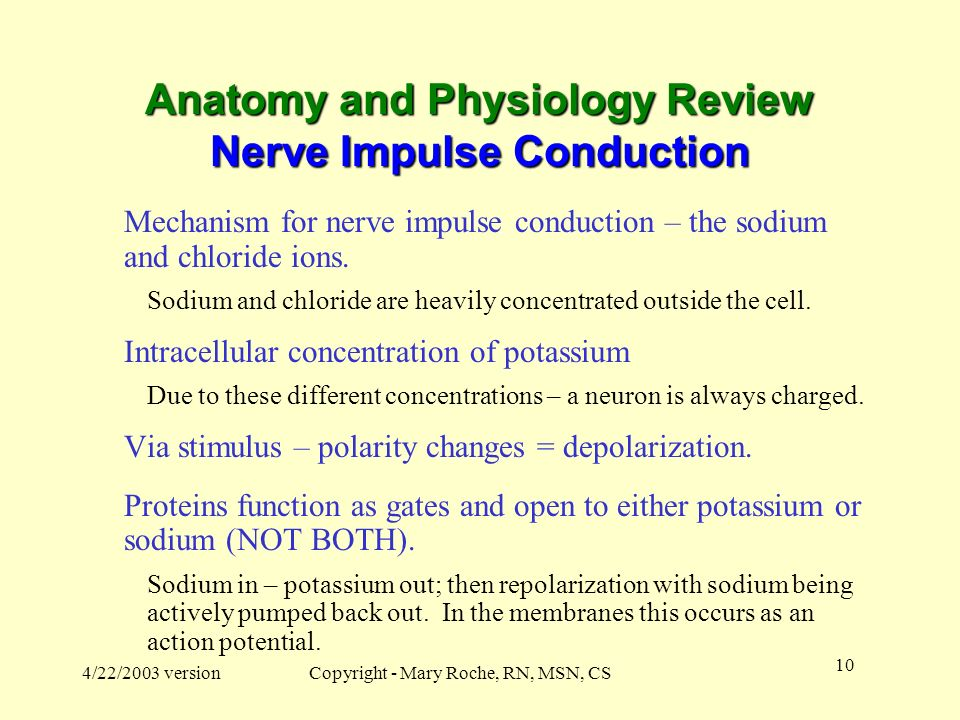 Anatomy and Physiology Review Nerve Impulse Conduction