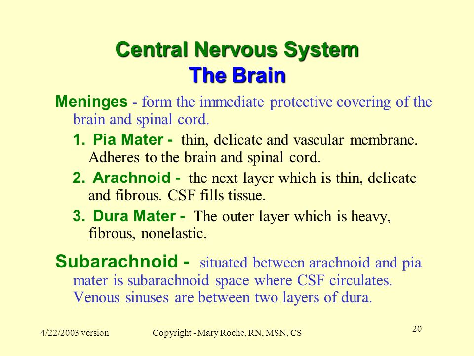 Central Nervous System The Brain