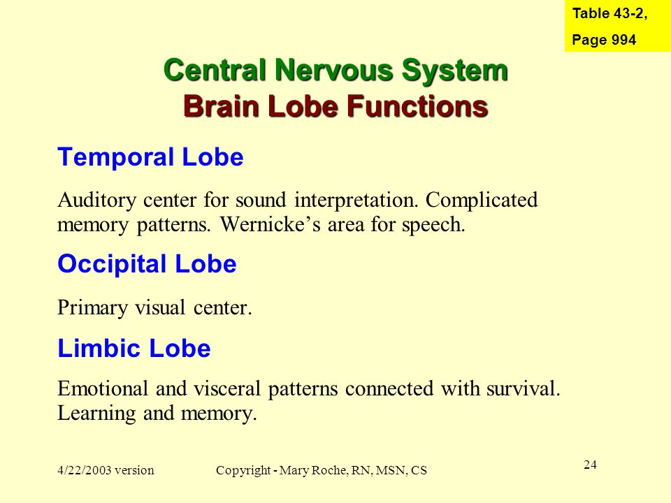 Central Nervous System Brain Lobe Functions