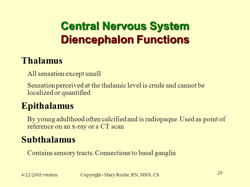 Central Nervous System Diencephalon Functions