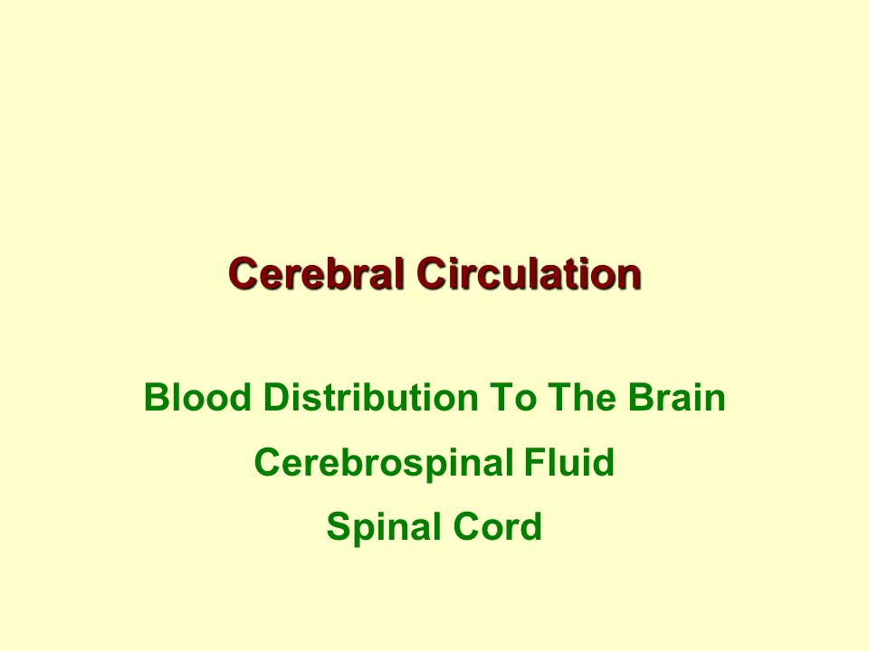 Blood Distribution To The Brain Cerebrospinal Fluid Spinal Cord