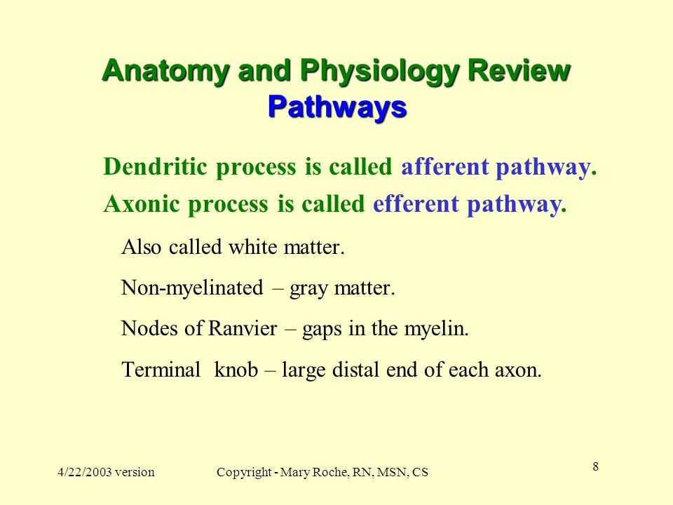 Anatomy and Physiology Review Pathways