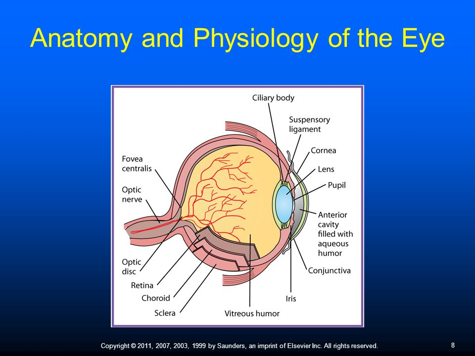 Assisting in Ophthalmology and Otolaryngology - ppt video online ...