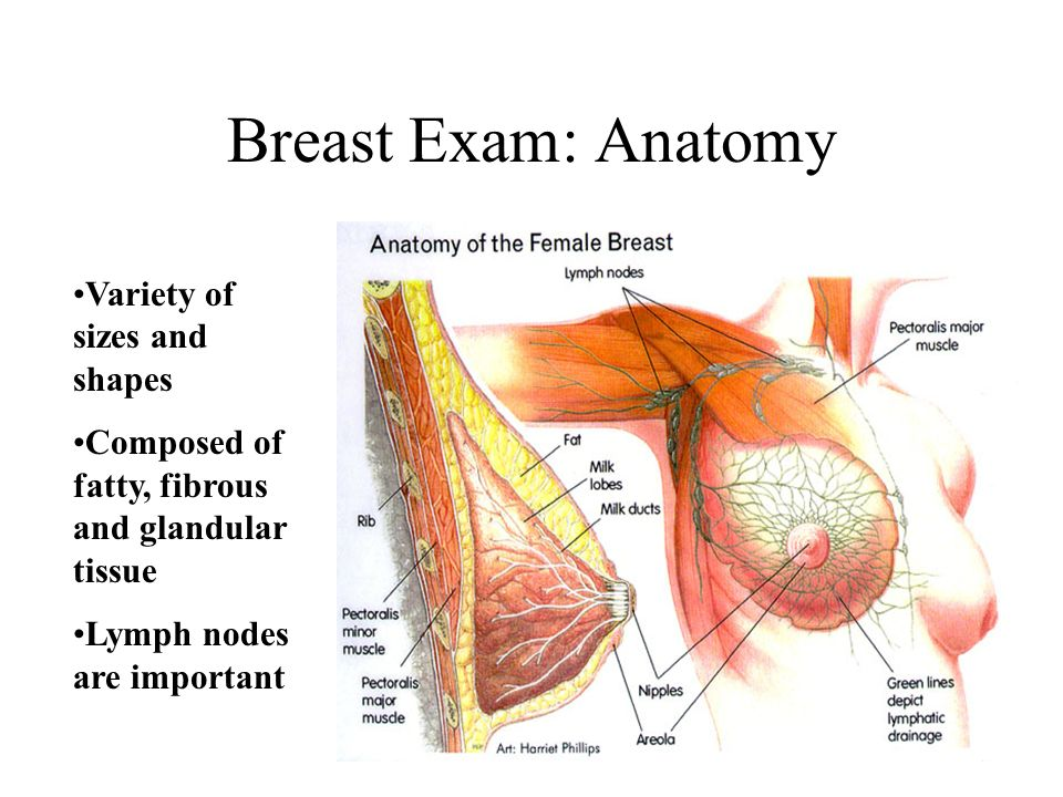 Breast Clinical Correlation - ppt video online download