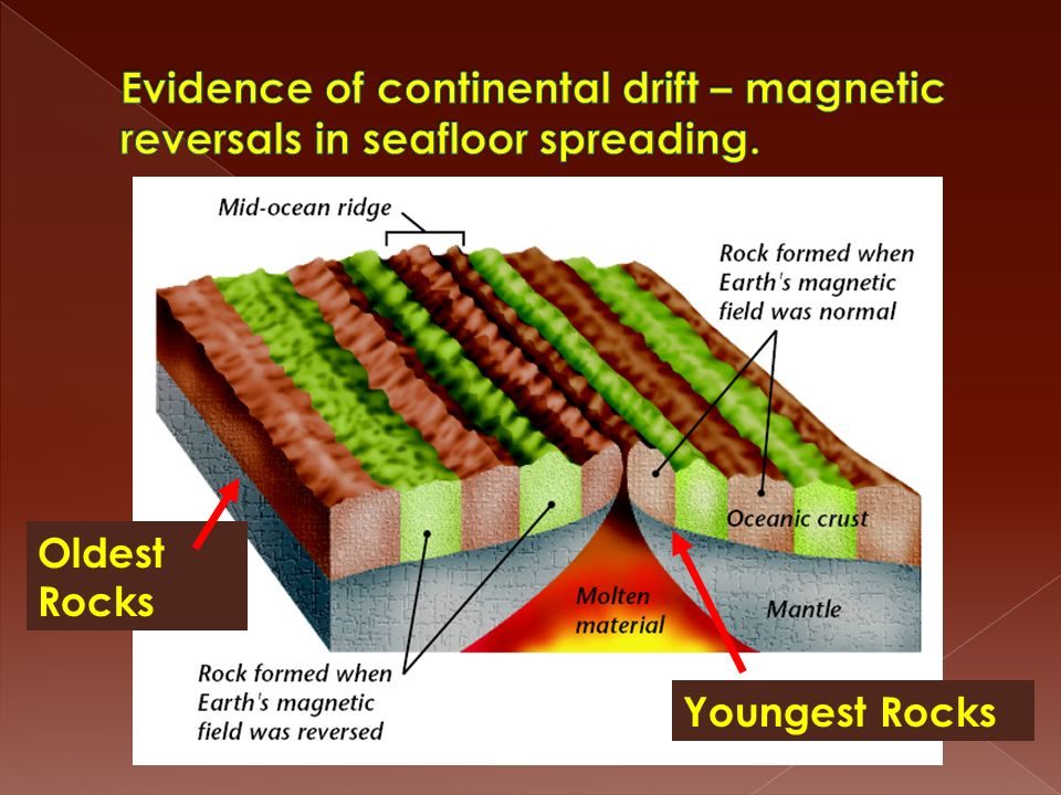 Evidence of continental drift – magnetic reversals in seafloor spreading.
