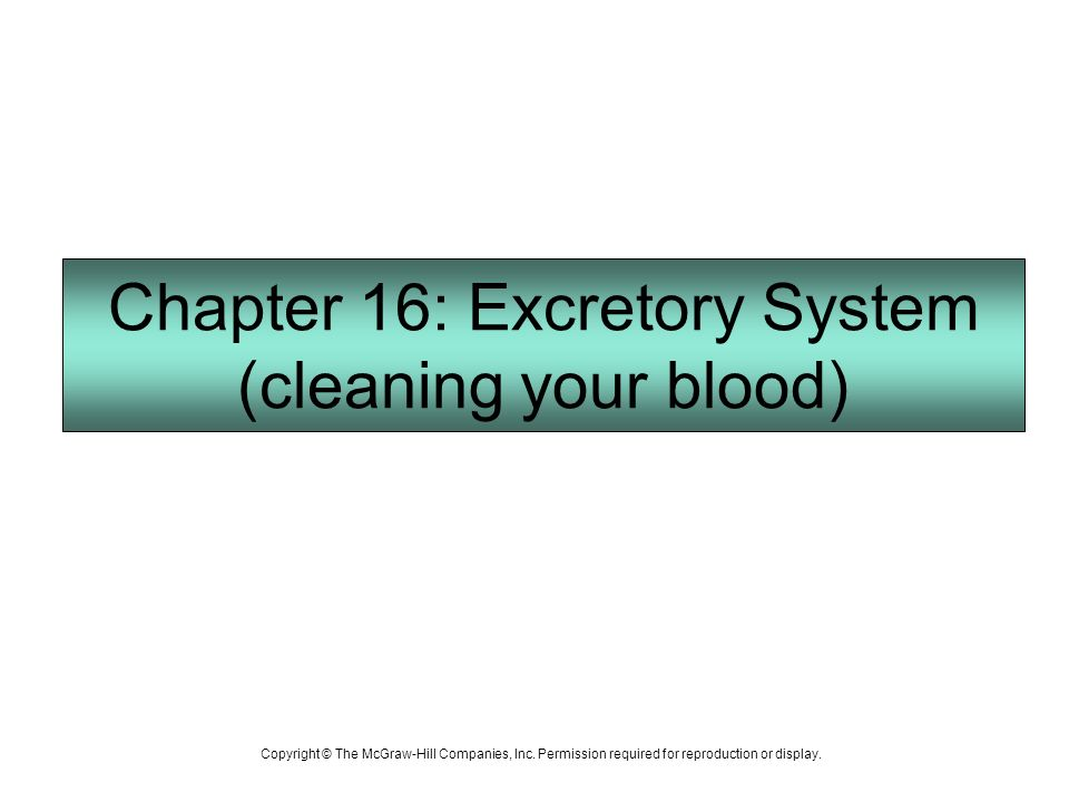 how to clean your blood system