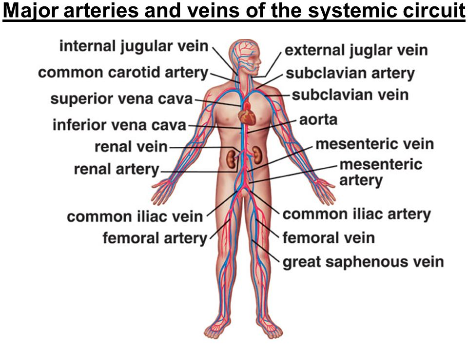 Chapter 12 Digestive System Ppt Download