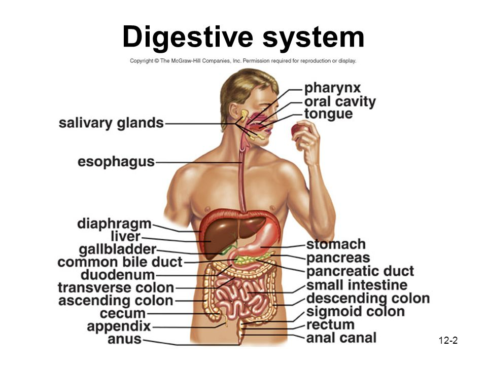 Parts Of The Digestive Tract Produce Digestive Enzymes Ppt Video