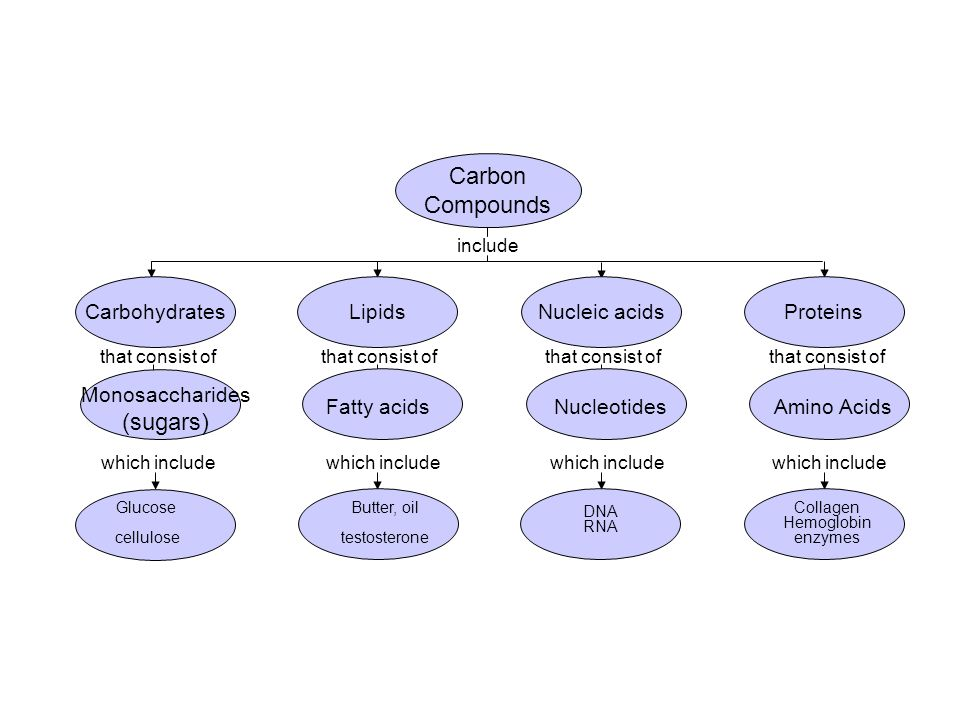 Concept Map Nucleic Acids.Unit 4 Chemistry Of Life Ppt Video Online Download