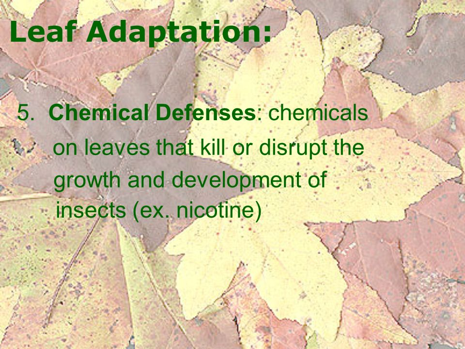 Leaf Adaptation: 5. Chemical Defenses: chemicals