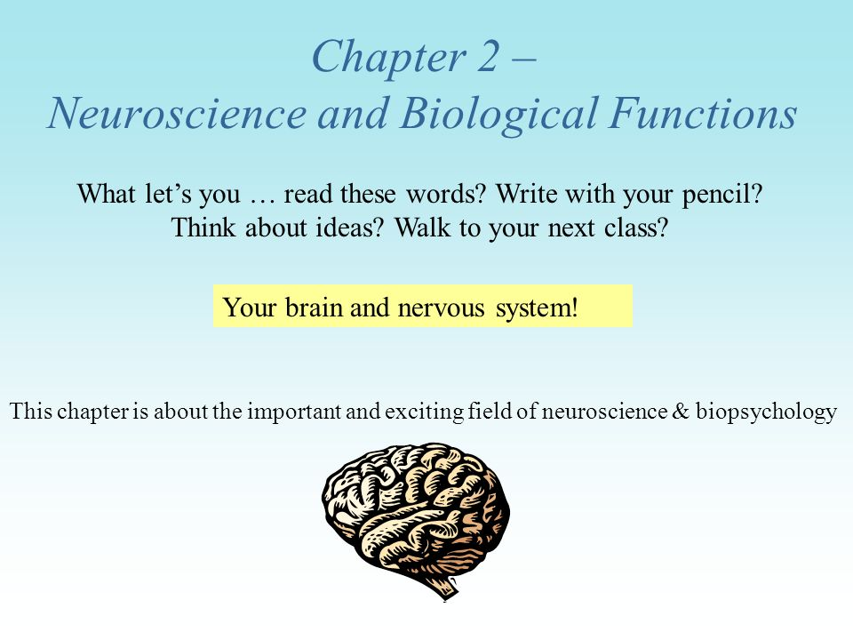 Chapter 2 – Neuroscience and Biological Functions