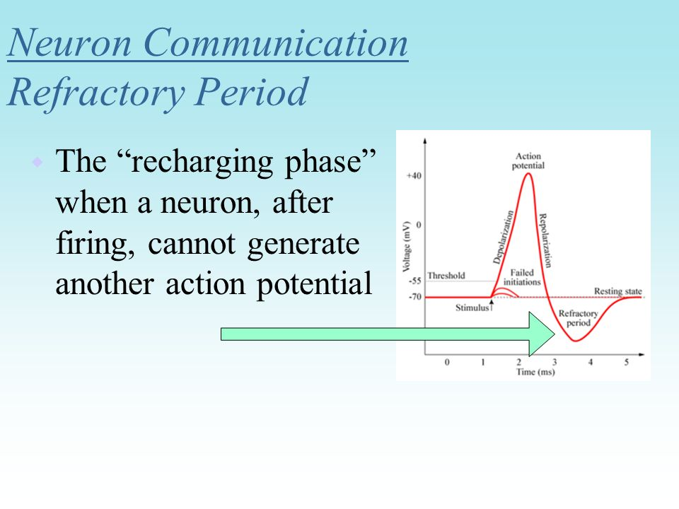 Neuron Communication Refractory Period