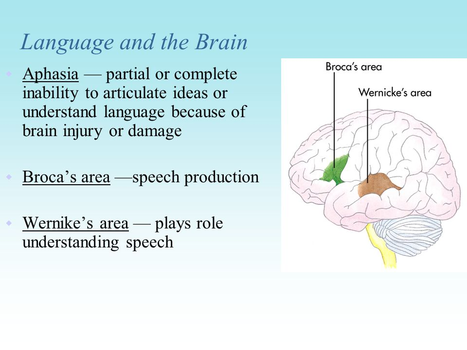 Language and the Brain Aphasia — partial or complete inability to articulate ideas or understand language because of brain injury or damage.
