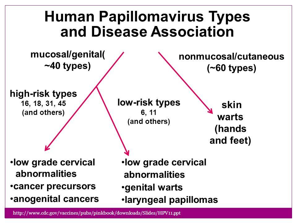 Natural History Of Human Papillomavirus And Anogenital Cancers