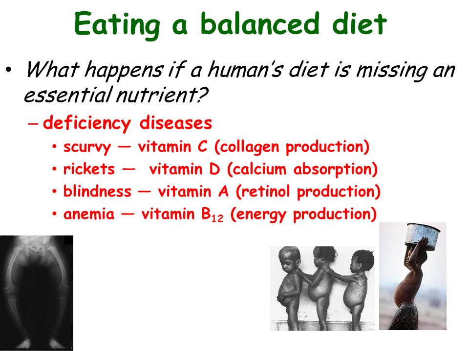 Talk Five: Digestion and Nutrition Chapter ppt video online