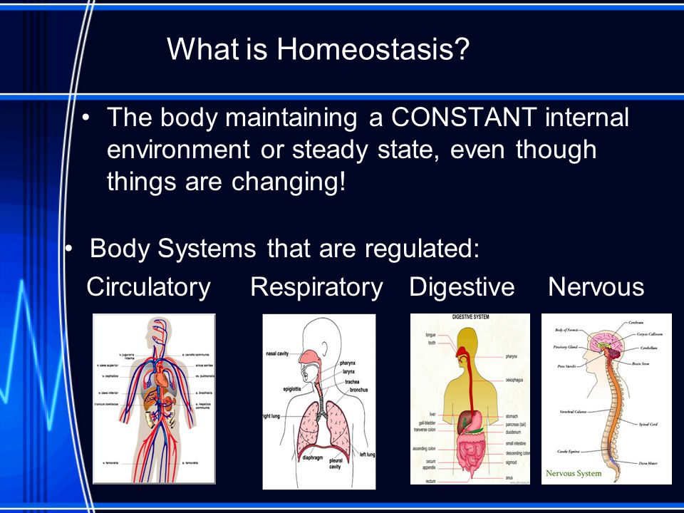 What is Homeostasis The body maintaining a CONSTANT internal environment or steady state, even though things are changing!