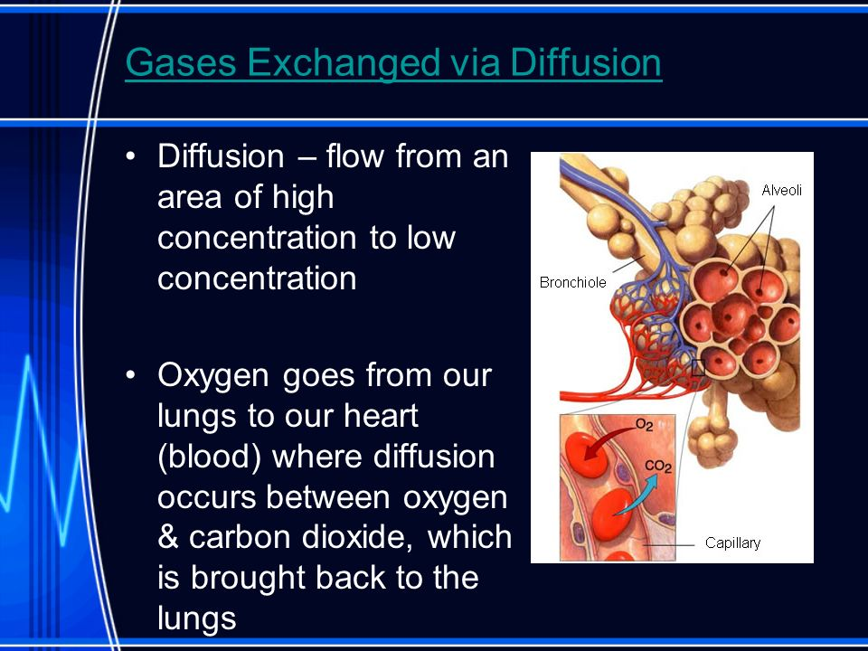 Gases Exchanged via Diffusion