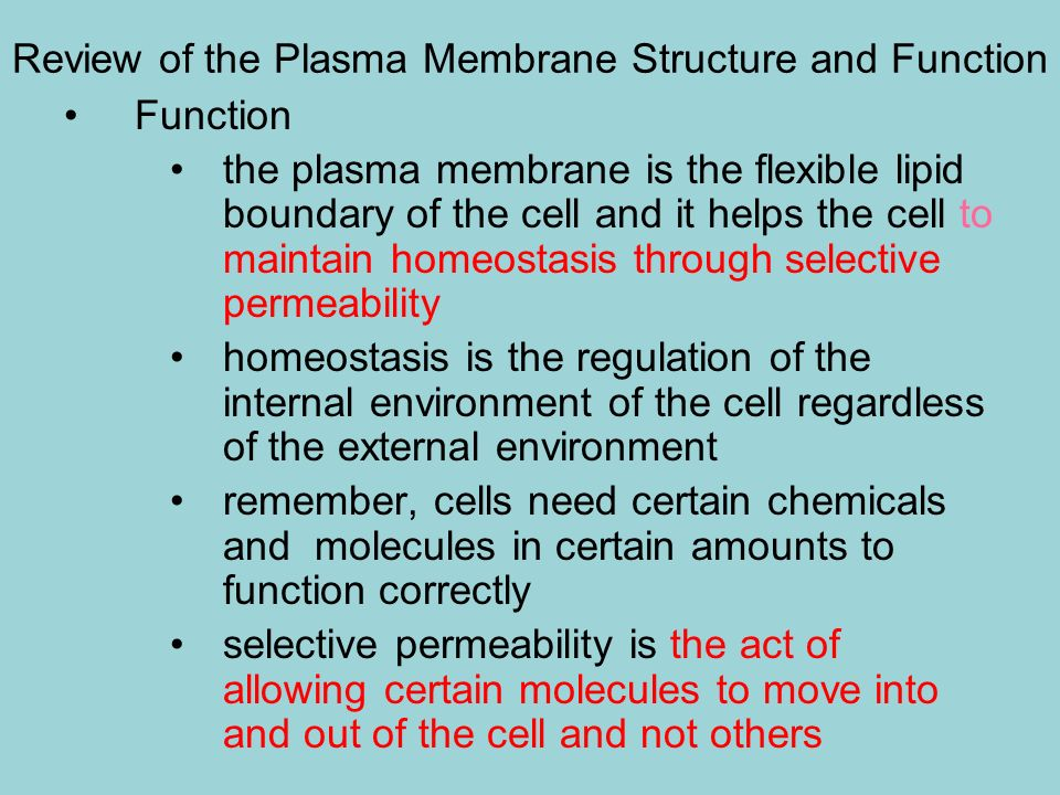 Review of the Plasma Membrane Structure and Function