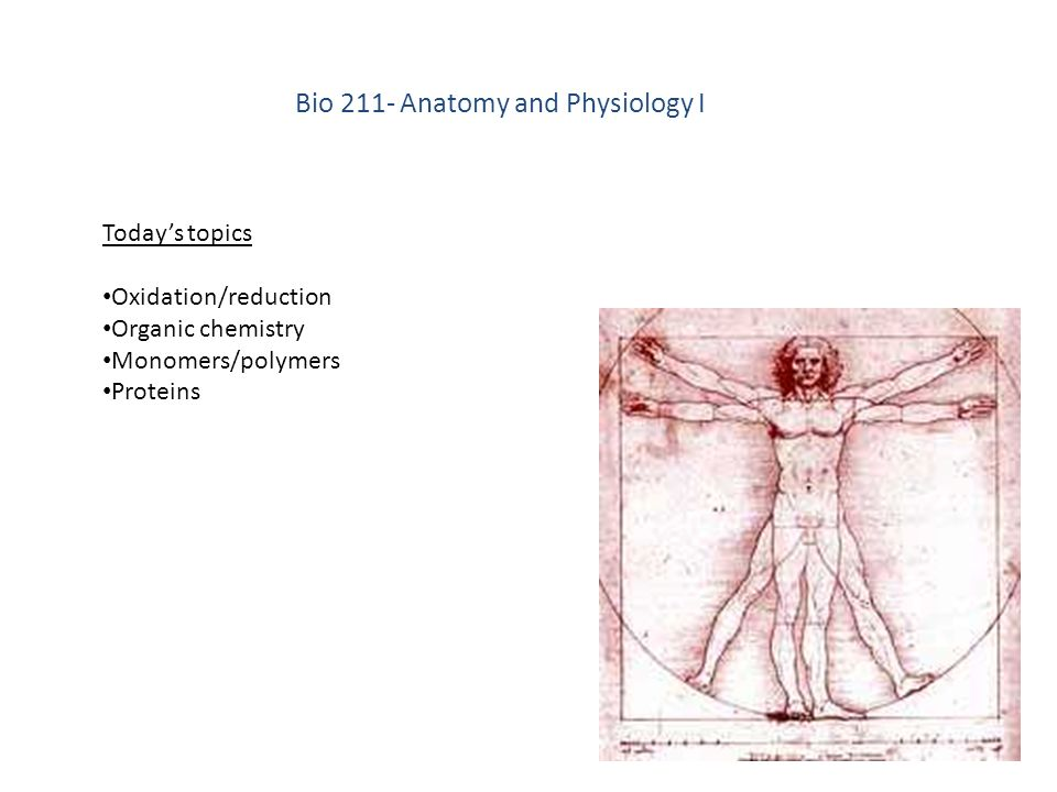 Bio 211: Anatomy and Physiology I - ppt download
