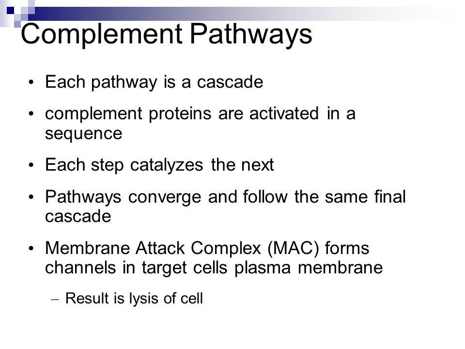 Complement Pathways Each pathway is a cascade