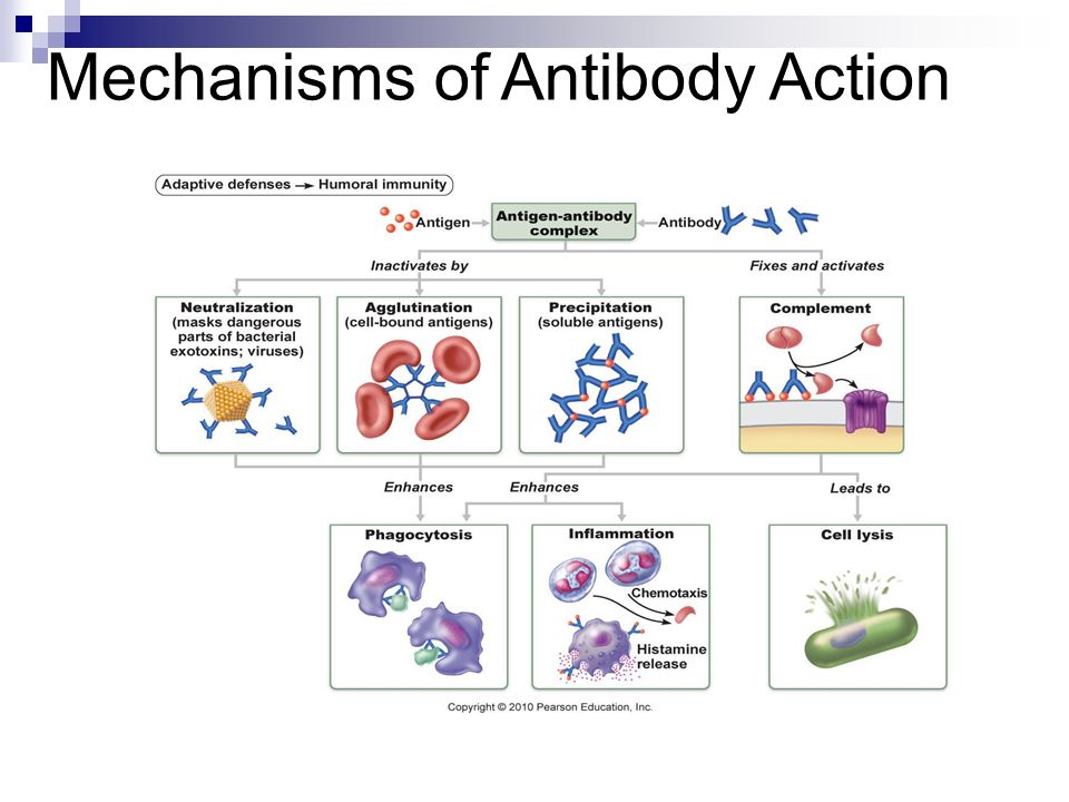 Mechanisms of Antibody Action
