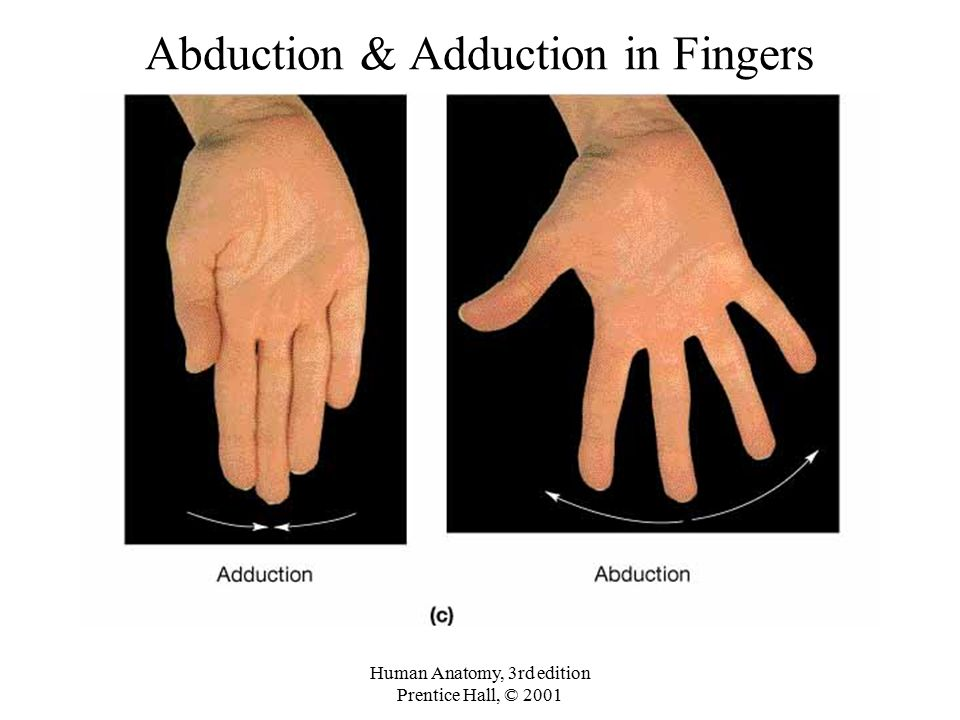 Abduction & Adduction in Fingers