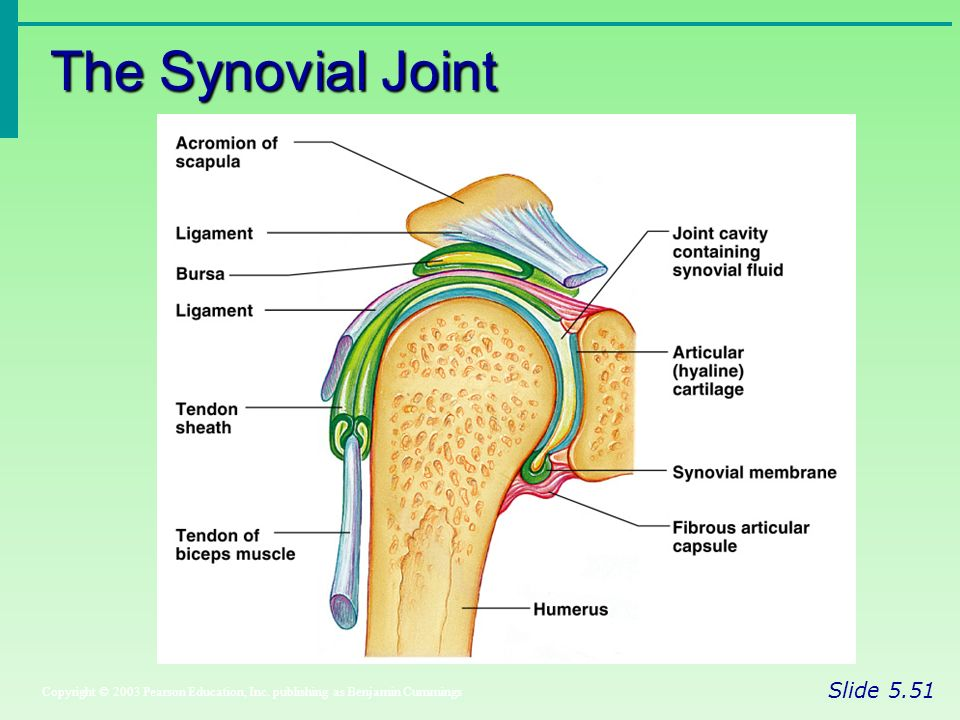 Articulations Aka Joints Ppt Download
