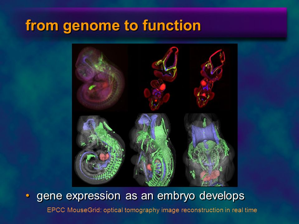 from genome to function