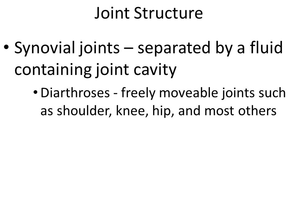 Synovial joints – separated by a fluid containing joint cavity