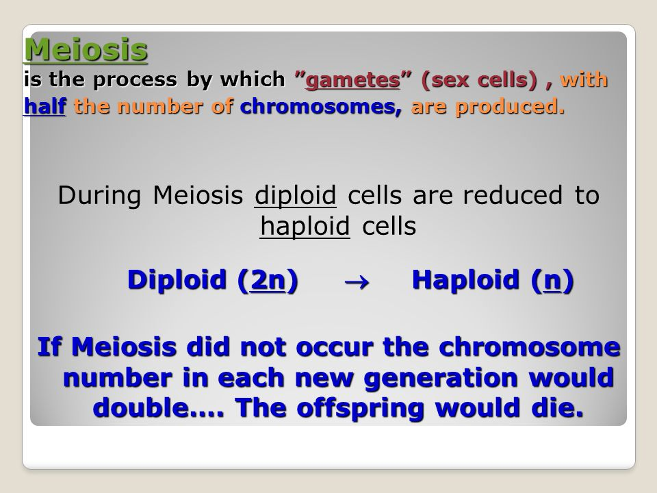 If Meiosis Did Not Occur In Sexually Reproducing Organisms