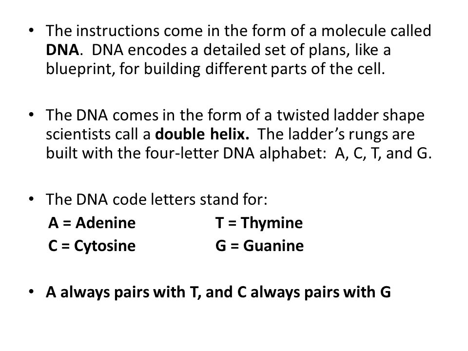what is the four letter dna alphabet what is the four letter dna alphabet how to format cover 24502
