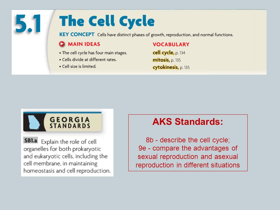 Advantages of asexual reproduction in cells diffusion