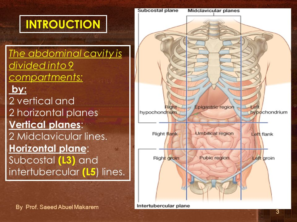 INTROUCTION The abdominal cavity is divided into 9 compartments: by: